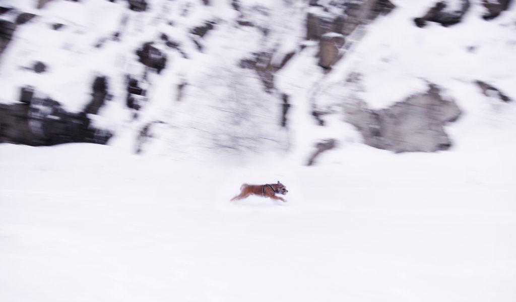 Eskil i vinterglädje