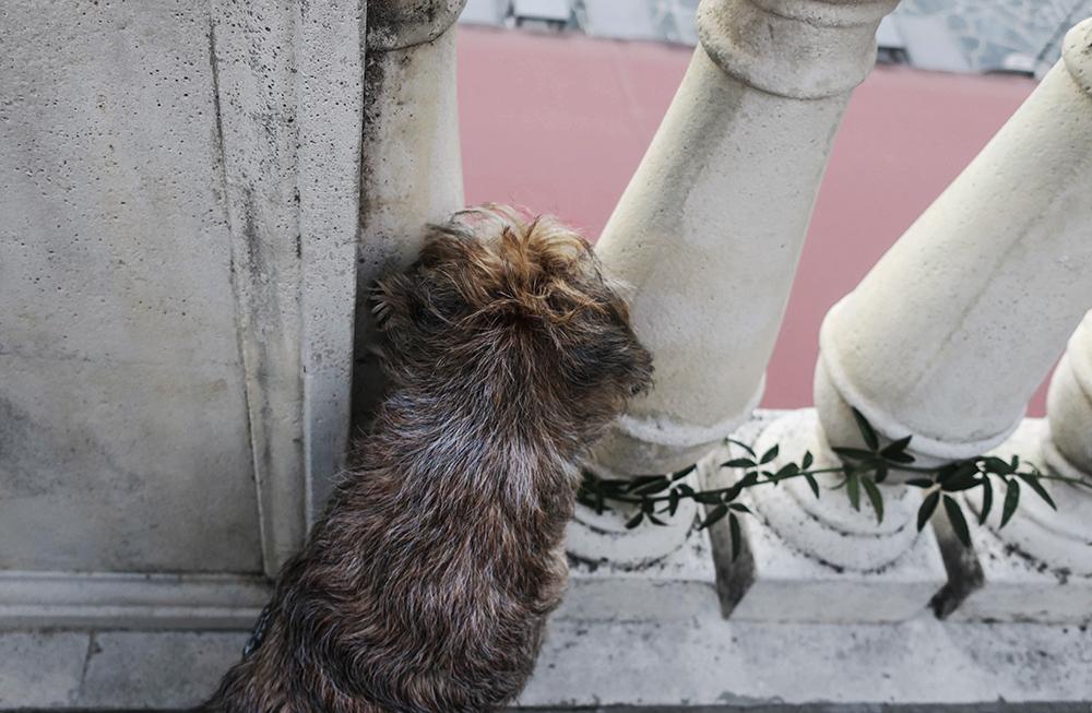 bila med hund Italien