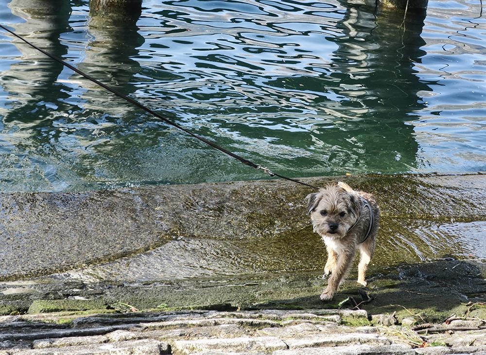 bila med hund till Italien