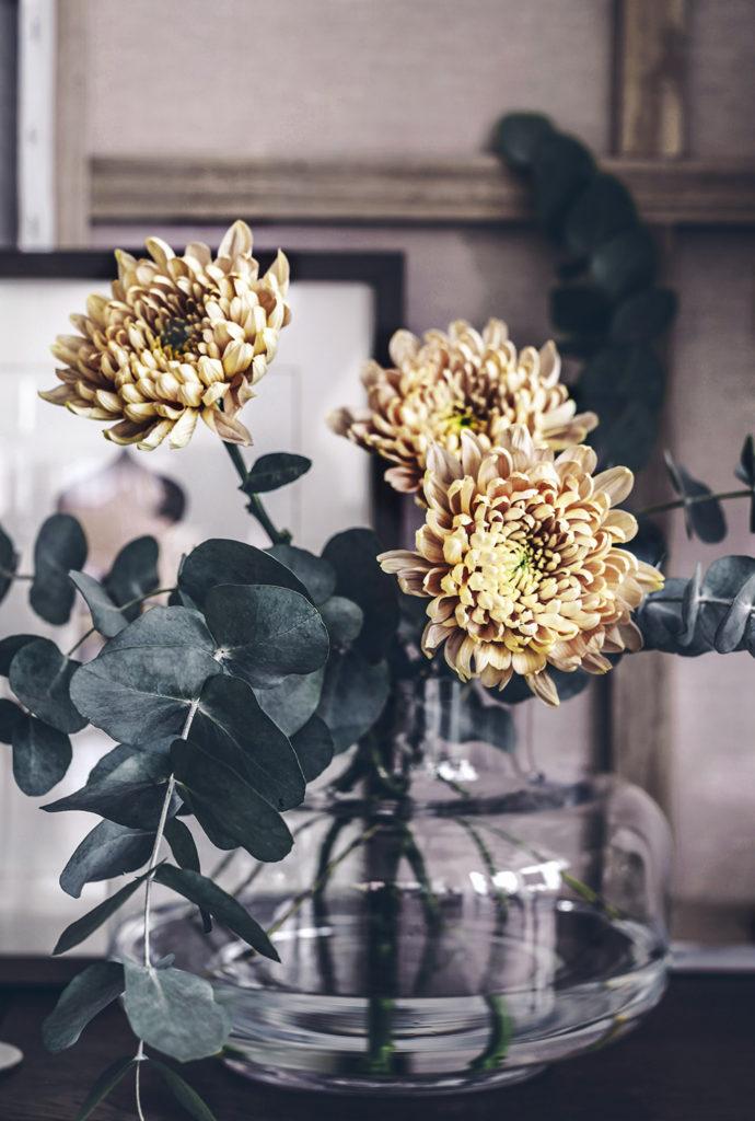 blommor, krysantemum snitt