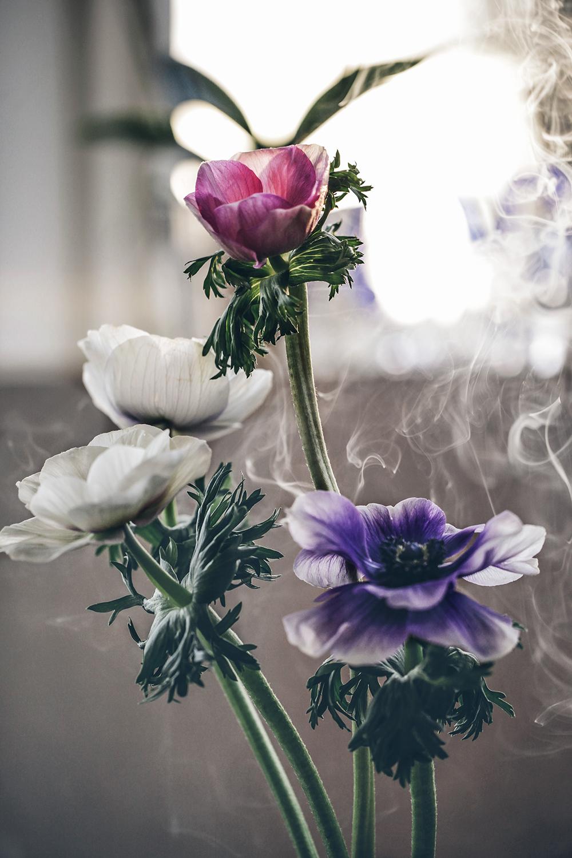 Tulpaner med lök, anemoner utan lök och vacker rök!
