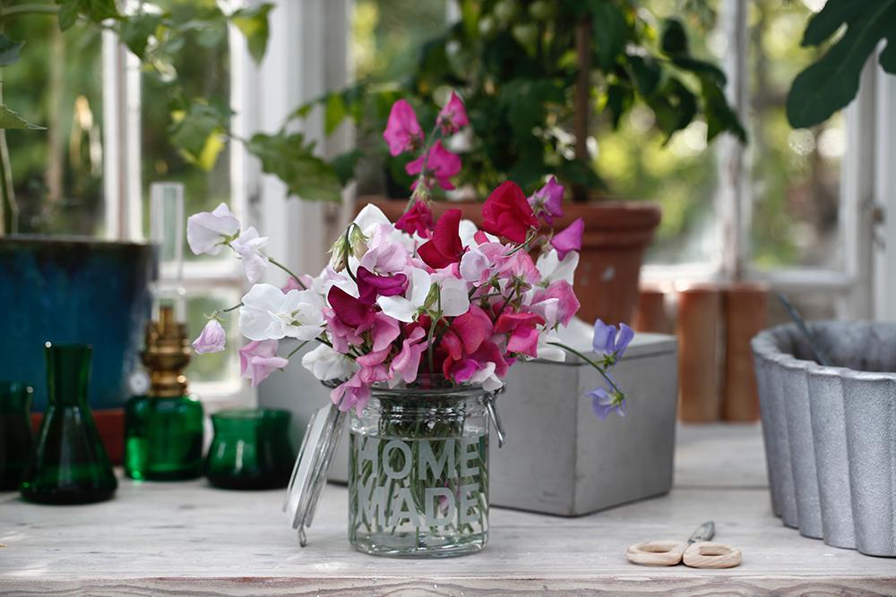 blommor, trädgårdsliv