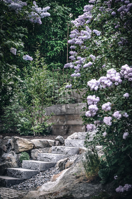 Trädgårdstider fortsätter … luktärtor, syrén och aningen stökigt!