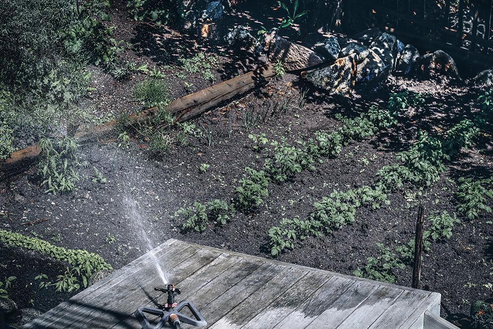odla potatis, trädgårdsliv