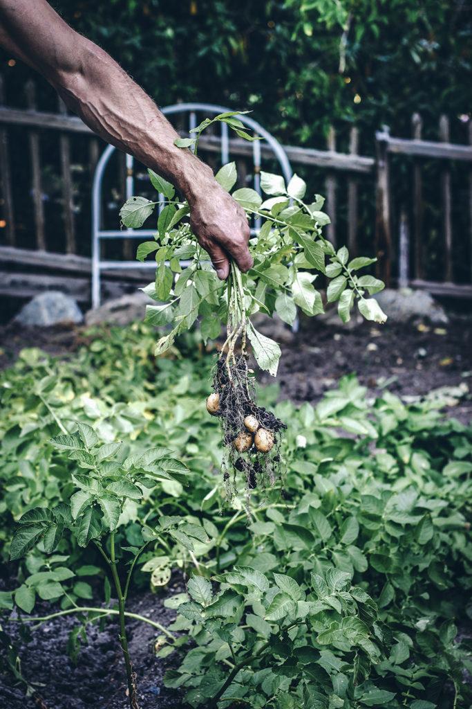 Potatisland, Trädgårdsliv