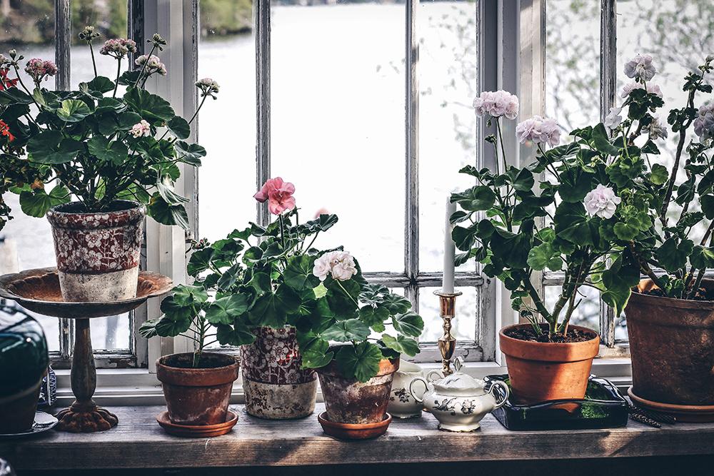 Växthus_Myrberg